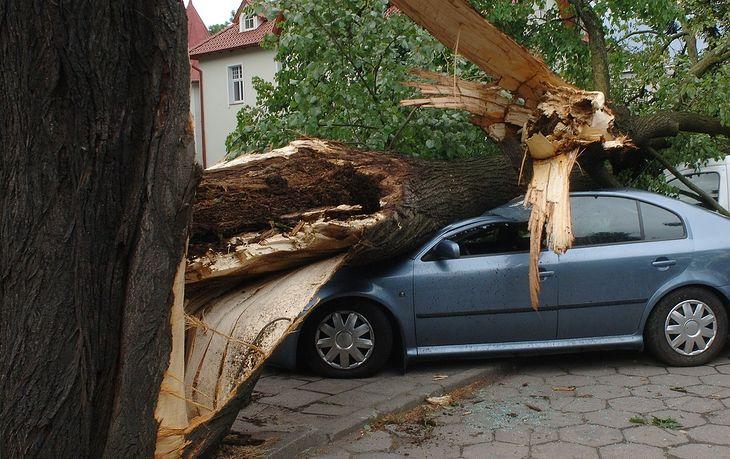 Uszkodzenie auta przez złamaną gałąź, drzewo lub grad to trudna sytuacja. Jeśli nie macie autocasco, będzie problem z odszkodowaniem.
