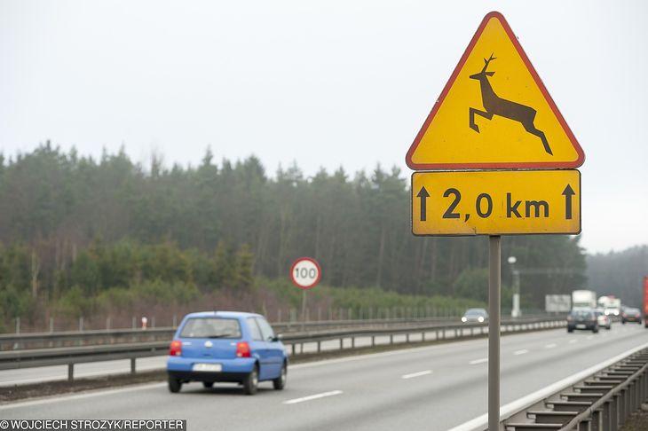 """Ten często ignorowany znak - A-18B """"zwierzęta dzikie"""" - jest niezwykle ważny na drogach szybkiego ruchu i po zmierzchu."""