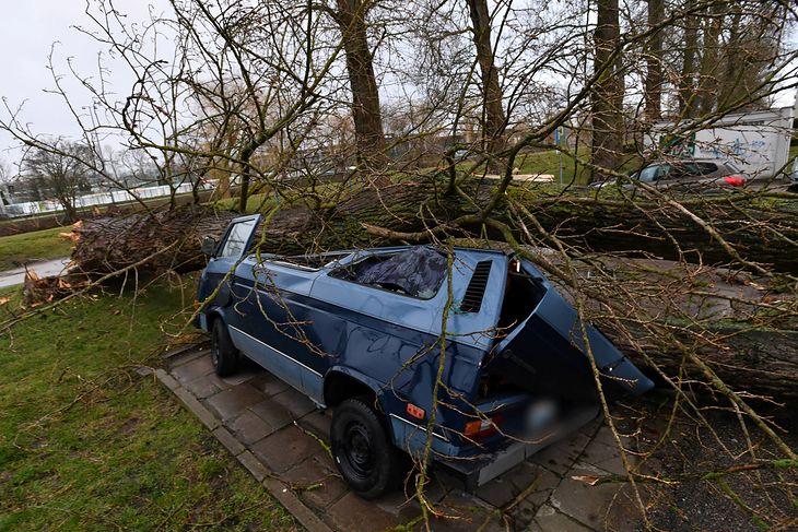 W konfrontacji z drzewem samochód nie ma szans