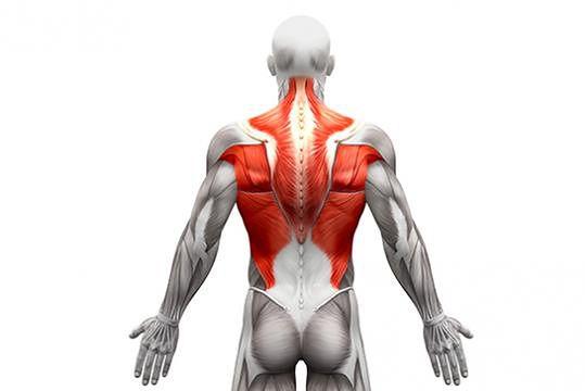 Ćwiczenia na plecy w domu. Sprawdź, jak angażować mięśnie grzbietu | Fitness