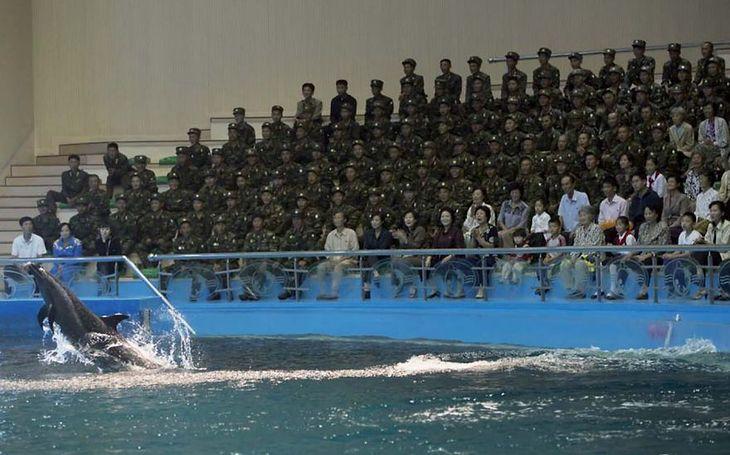 Będąc w delfinarium w Pjongjang można fotografować zwierzęta, ale nie żołnierzy, którzy stanowią 99 proc. tłumu.