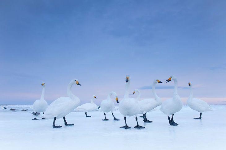 Fot. Stefano Unterthiner / dla National Geographic / Włochy