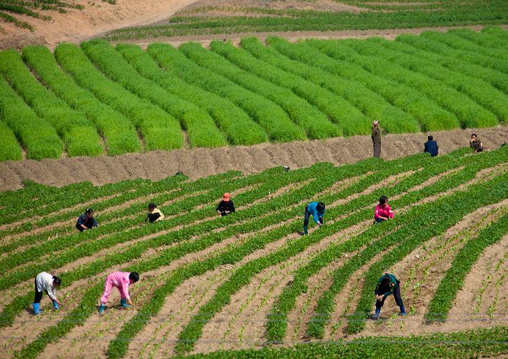 Dzieci pracują na farmie.