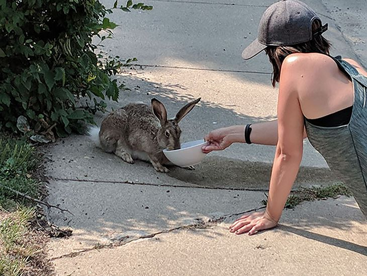 Dzikie zwierzęta szukająratunku u ludzi.