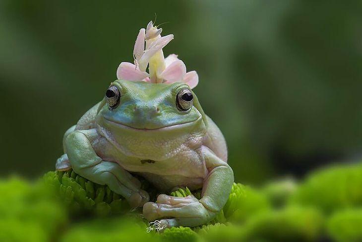 Pani w stylowym kapeluszu z modliszki kwiatowej.