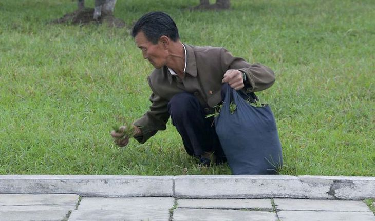 Miejscowi często zbierają trawę w parkach i ją jedzą. Przewodnicy wpadają w szał, gdy ktoś robi takie zdjęcia.