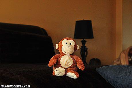 Jako swój cel, Ken wybrał tę oto małpkę...