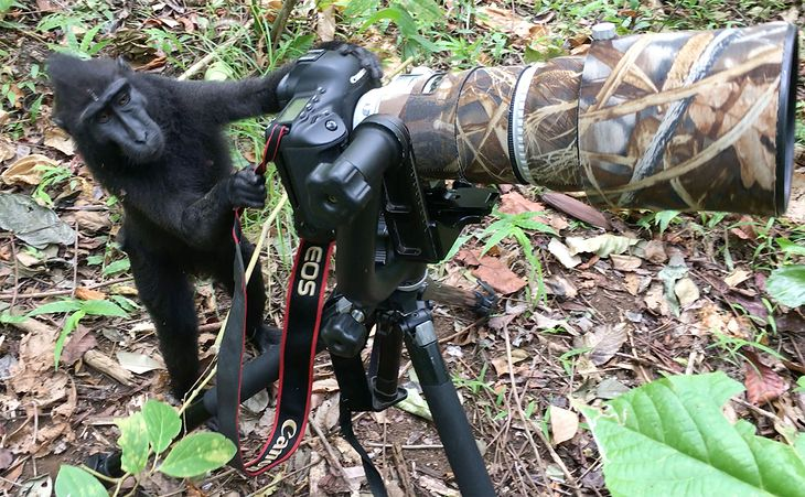 czarny nagi amatorczarna cipka do cipki