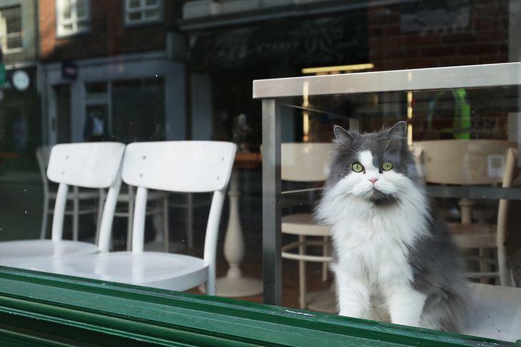 """Kot to jedyny """"gość"""" londyńskiej restauracji"""