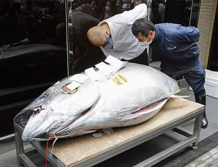Tuńczyk błękitnopłetwy sprzedany za 200 tys. dolarów.