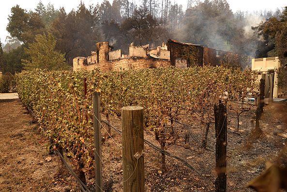 Pożary winnic w Kalifornii.