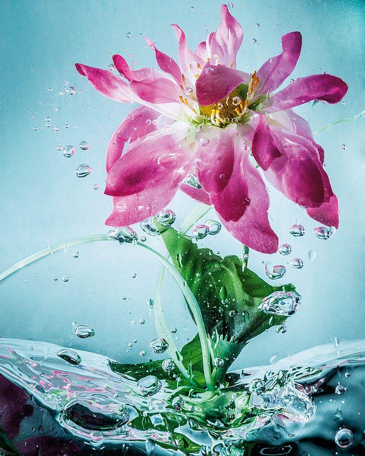 Sztuczny kwiat sfotografowany pod wodą (Ben Brain/Digital Camera Magazine/Future via Getty Images)