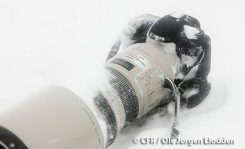 Czy Canon 7D przetrwa trudy Antarktyki?