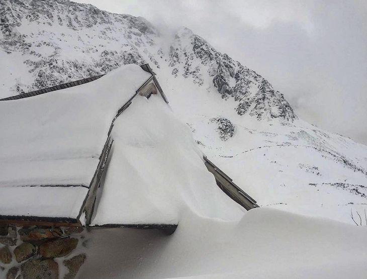 Zdjęcie dnia. Żółty śnieg w górach
