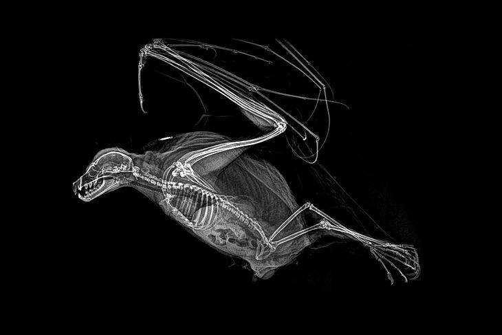 Góra Nietypowe zwierzęta w promieniach rentgena - zaskakująca kolekcja GV97