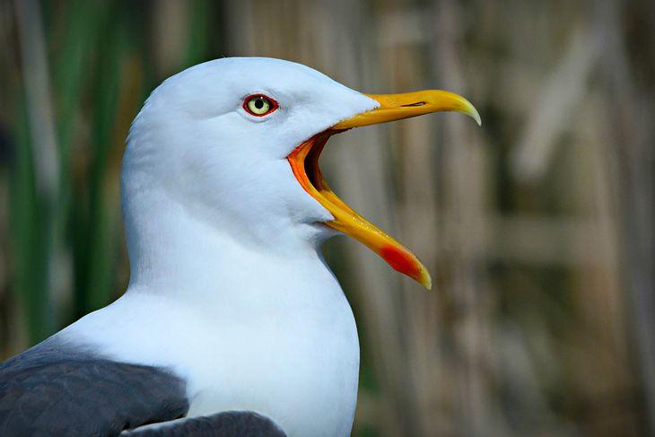 Kamery i SI pomogły zbadać zachowanie ptaków morskich