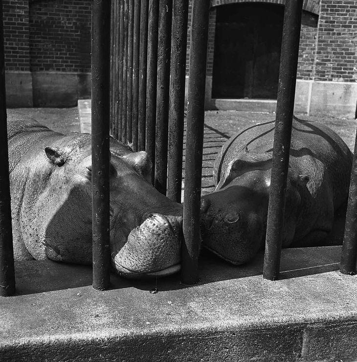 Vivian Maier/Courtesy Cityfiles Press