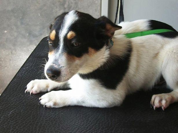 Pies przeznaczony do adopcji