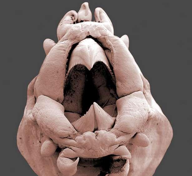 Bestia spod mikroskopu (Fot. Dvice.com)