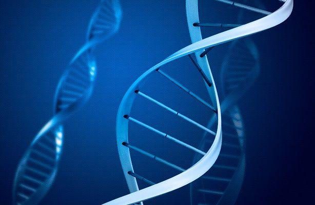 Inteligencja ludzka to efekt błędu kopiowania DNA (fot.: rgbstock.com)