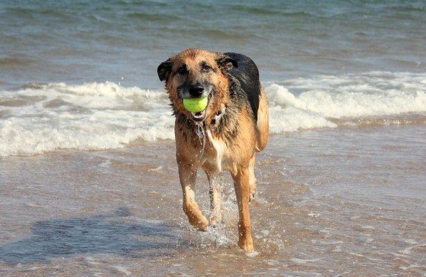 Plaża dla psów w Trójmieście (fot.: sxc.hu)