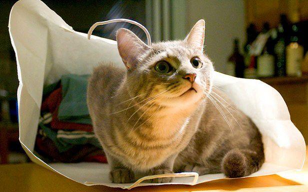 Kot w worku (Fot. Flickr/mava/Lic. CC by-sa)
