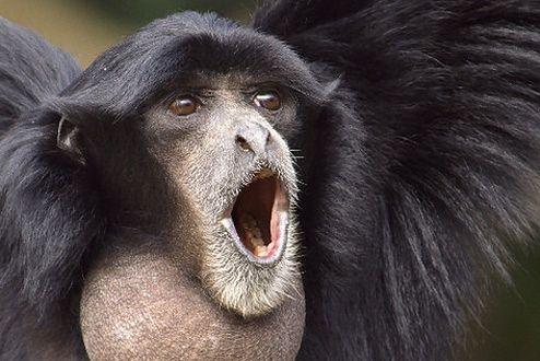 Małpa (Fot. Flickr/suneko/Lic. CC by-sa)