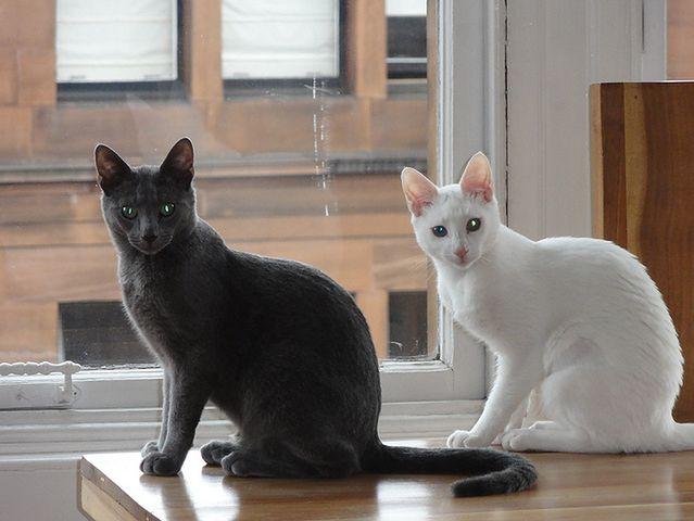 To ten sam kot w układzie 0-1 (Fot. Flickr/CC)