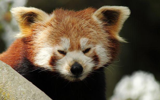 Firefox ;) (Fot. Flickr/Memkaos/Lic. CC by)