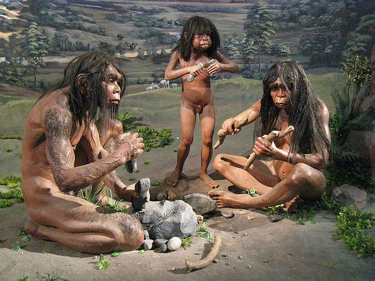 Homo erectus - Muzeum Narodowe Indonezji (Wikimedia Commons)