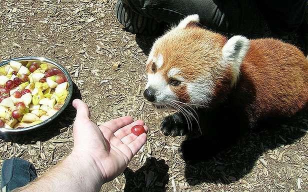 Jak zmniejszyć apetyt Firefoksa? (Fot. Flickr/Glutnix/Lic. CC by)