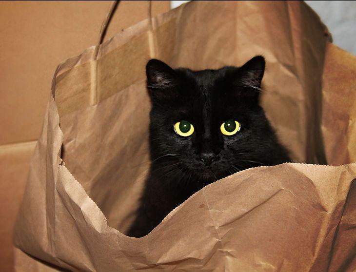 A może kota w worku? (fot. na lic. CC; Flickr.com/by jinterwas)