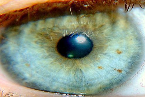 Oko (Fot. Flickr/Jule Berlin/Lic. CC-by)