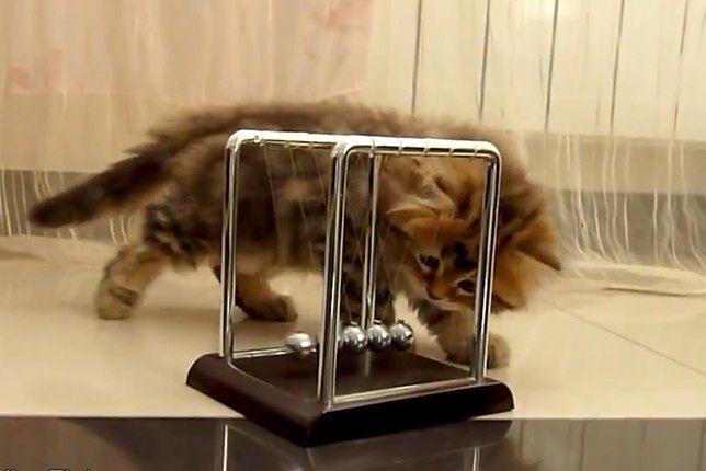 Kot i fizyka
