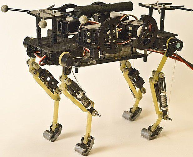 Robot, który prawie jest kotem