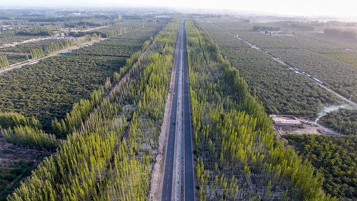 Утворюється найбільший штучний ліс на планеті.