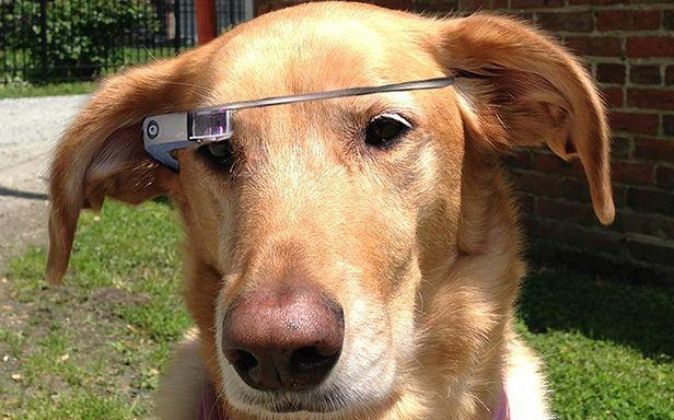 Pies blogerki nosi okulary Google (Fot. Mashable)