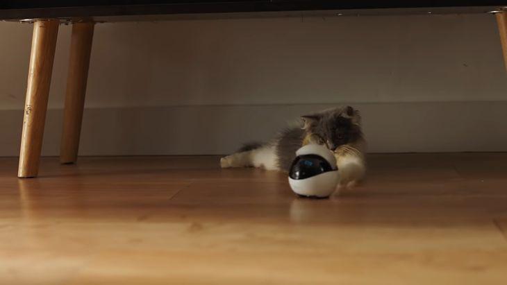 Ebo - zabawka dla kota