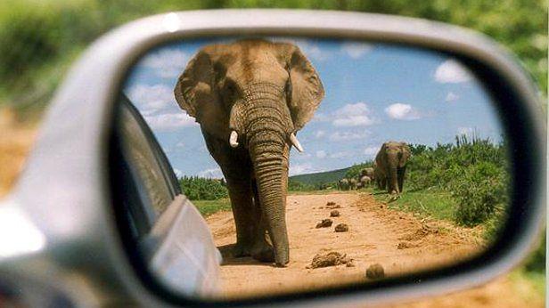 Słonia można zmniejszyć do rozmiarów myszy (fot. Brian Snelson CC-BY)