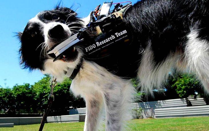 Kamizelka FIDO pozwoli psom na komunikację z ludźmi