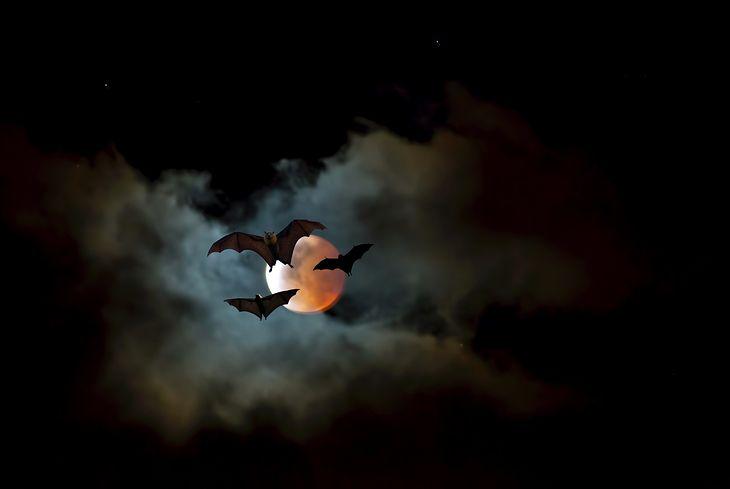 Najlepsze filmy o wampirach wytyczają ścieżki dla nowych produkcji