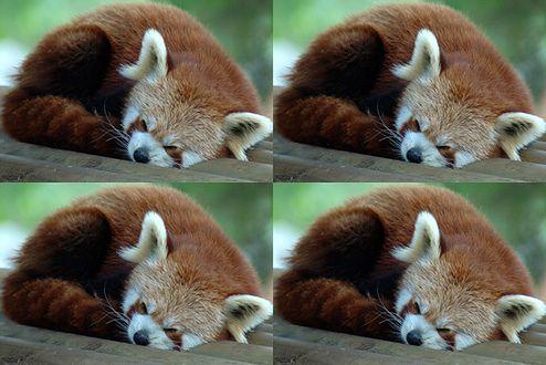 Firefox (Fot. Flickr/Raphael Quinet/Lic CC by)