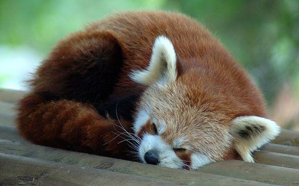Firefox (Fot. Flickr/Raphael Quinet/Lic. CC by-sa)
