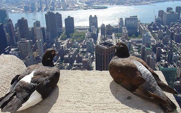 Gołębie również korzystają z dróg! (Fot. Flickr/ZeroOne/Lic. CC by-sa)