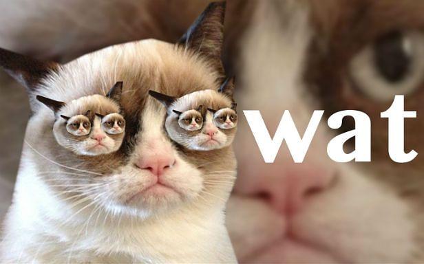 Grumpy Cat atakuje z każdej strony