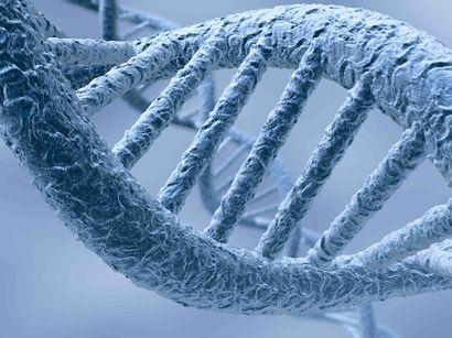 Helis DNA