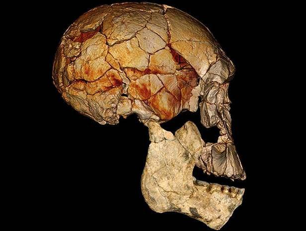 Czaszka odkryta w 1972 roku, uzupełniona niedawno znalezionymi kawałkami kości (Fot. Wired)