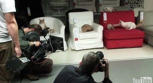Ikea koty
