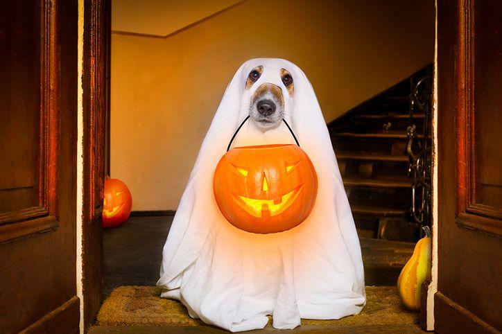 Halloween coraz częściej obchodzimy także w Polsce