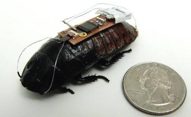 Zdalnie sterowany karaluch (Fot. Dvice.com)